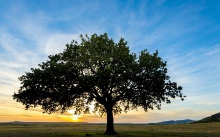 siluet: sunset and siluet of tree on field Stock Photo