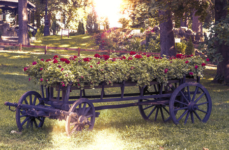 old wheel cart with flowers in the park photo