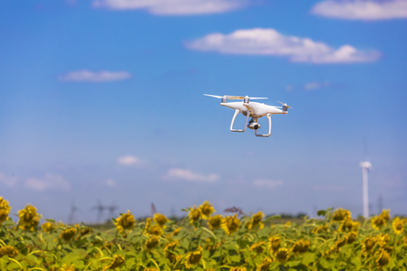 Drone hovering over sunflower field  in clear blue sky partly clouded Stock Photo