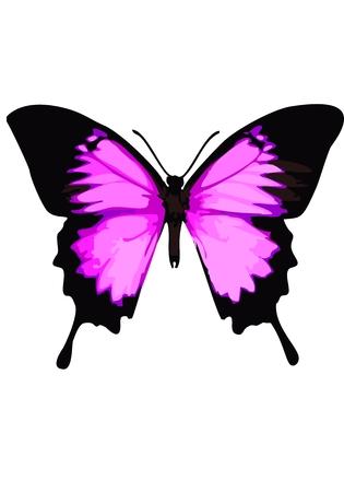 animalitos tiernos: Mariposa de Swallowtail, mariposa de color rosa sobre un fondo blanco.