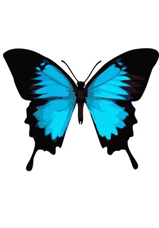 animalitos tiernos: Mariposa de Swallowtail, mariposa azul sobre un fondo blanco.