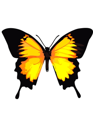 swallowtail: Swallowtail butterfly, yellow butterfly on a white background. Illustration
