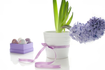Purple hyacinth in a white pot with Easter eggs in a box photo