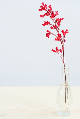 coral bell: Heuchera in a glass vase on a wooden table Stock Photo