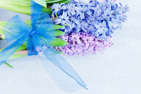 Bouquet of hyacinths, tied with a blue ribbon photo