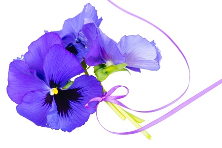 Bouquet of purple pansies, purple ribbon tied, white background photo