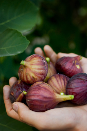 anti season: Sweet Ripe figs straight from the bush