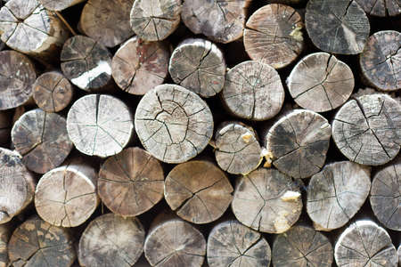 woods Stock Photo