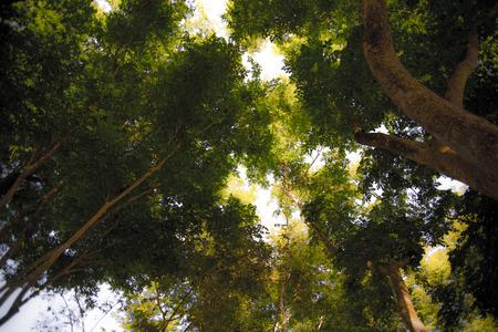 shady: shady trees Stock Photo