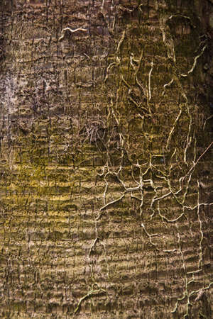 old trunk coconut in wood Stock Photo - 9659727