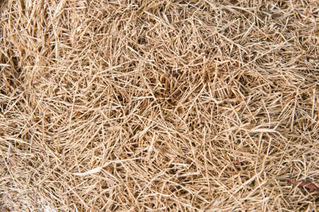 cereal straw just after harvesting texture  photo