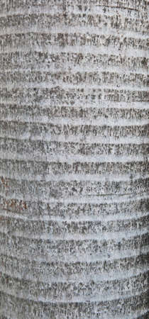 Trunk detail of palm tree background texture pattern photo