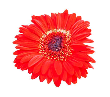 red flower on a background Stock Photo - 11284927