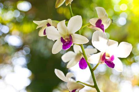 flower festival in Thailand  photo