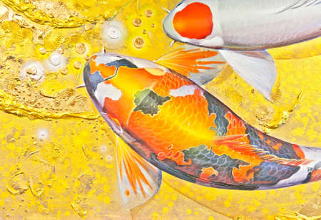 Koi goldfish in orange and white color photo