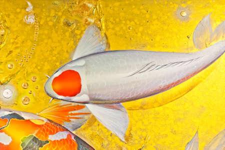 fresh water aquarium fish: Koi goldfish in orange and white color