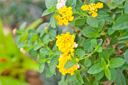yellow flower in flower shop  photo