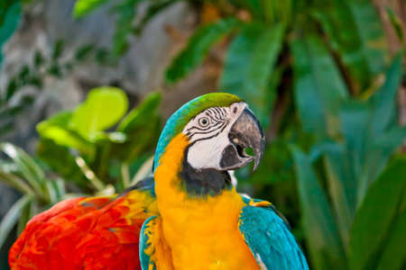 Colorful macaw parrot  Stock Photo - 13592274