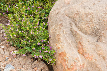 colourful flowers and a stone Stock Photo - 13629338