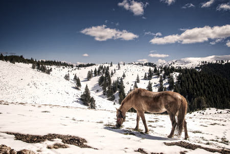 Horse trying to find some food the mountain photo