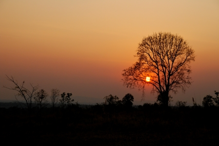 Silhouette of tree in the sunset photo