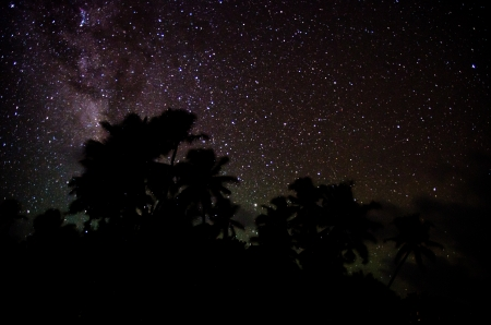 palmtrees: Stars and palmtrees