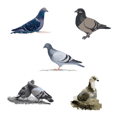 Abstract vector pigeon isolated on a light background.