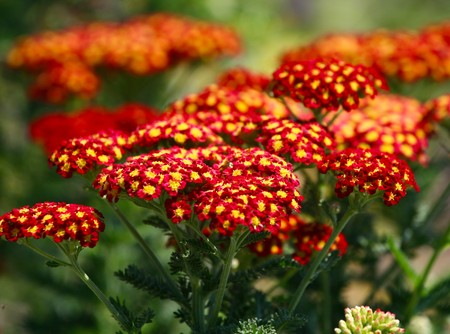 Beautiful orange flowers with selective focusing for effective depth control Stock Photo - 4441007