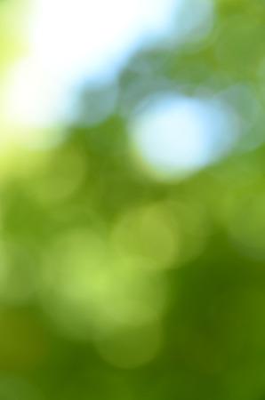 blurred bokeh. 版權商用圖片