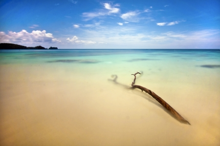 single wood in tranquility enviroment Stock Photo - 17039668