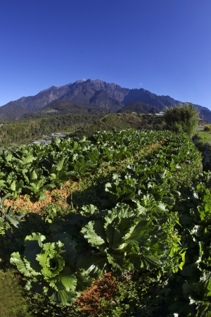 wor: Highest mountain in asia, Mount kinabalu