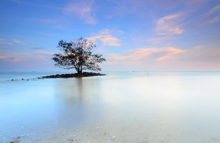 peacefulness: Lone tree growing right in the middle of a lake at dusk with a beautiful cloudscape Stock Photo