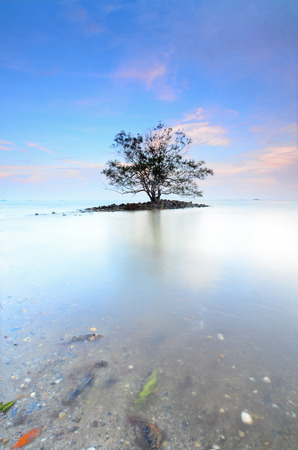 Lonely tree in the middle of sea during sunset photo
