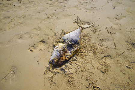 Death fish on the beach, global warming extinction.