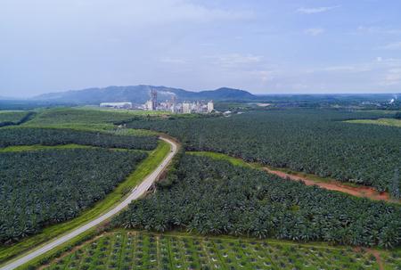 Arialmening van oliepalmaanplanting op Oost-Azië.