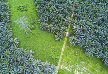 Arial view of oil palm plantation on east Asia. Stok Fotoğraf - 78495814