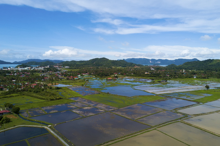 arial views: Arial view of beatiful green paddy field with blue sky at Langkawi Island