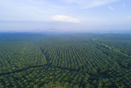 arial views: Arial view of palm plantation at east asia