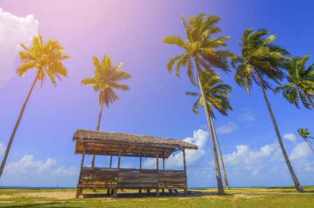Single traditional hut surrounded by coconut  palm tree near the beach for a vacation Stock Photo