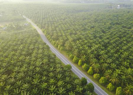 Luchtfoto van Palm plantage in Zuidoost-Azië Stockfoto