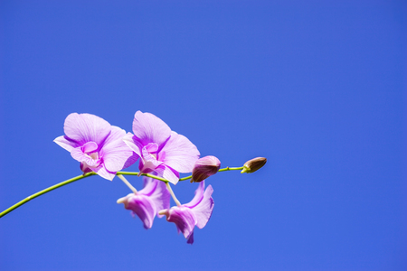 Beautiful purple orchid flower over blue sky background with copyspace area. Stock Photo