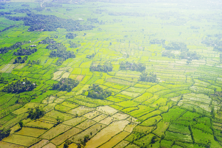 Aerial view of beautiful green paddy field at Lombok, Indonesia