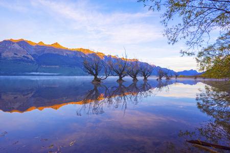 Row of willow trees on Lake Wakatipu in Glenorchy, New Zealand