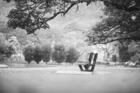 Lonely chair near lake and nature
