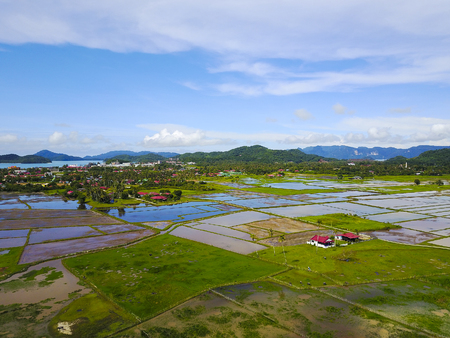 Arial view of beatiful green paddy field with blue sky at Langkawi Island