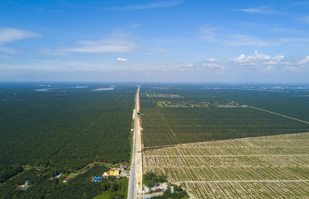 Arial view of palm plantation with dramatic blue sky at background