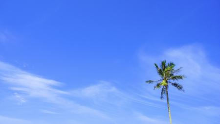Coconut tree over blue sky