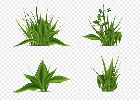 Elements of grass of different shapes. Realism