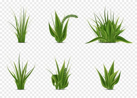 Realistic green fresh grass on white background. 3D fresh spring plants, different herbs and bushes for posters and advertisement. Vector set isolated objects on white
