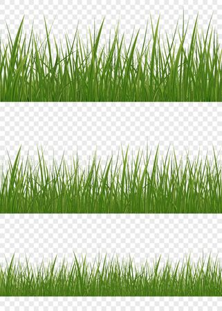 Green grass meadow border vector pattern. Spring or summer plant lawn. Set of realistic vector elements of nature for design illustrations. Ilustração